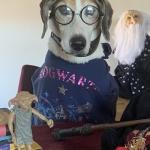 hogwarts-3-small