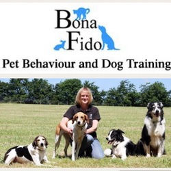 Dog Rescue Homes In Devon And Cornwall