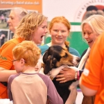 Paddy at Crufts March 15
